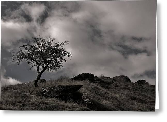 The Last Tree Greeting Card by Sean Wareing