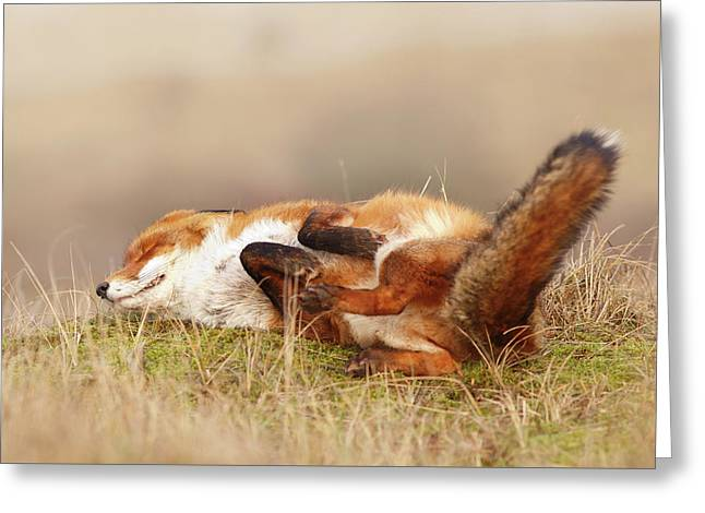 The Laughing Fox Greeting Card
