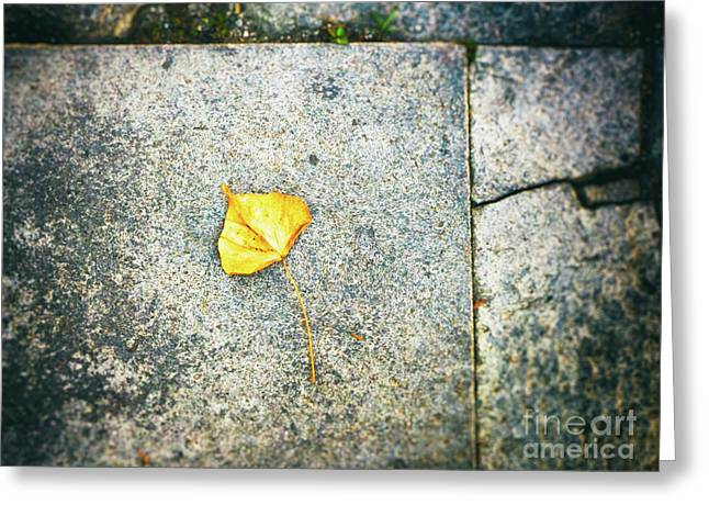 Greeting Card featuring the photograph The Leaf by Silvia Ganora