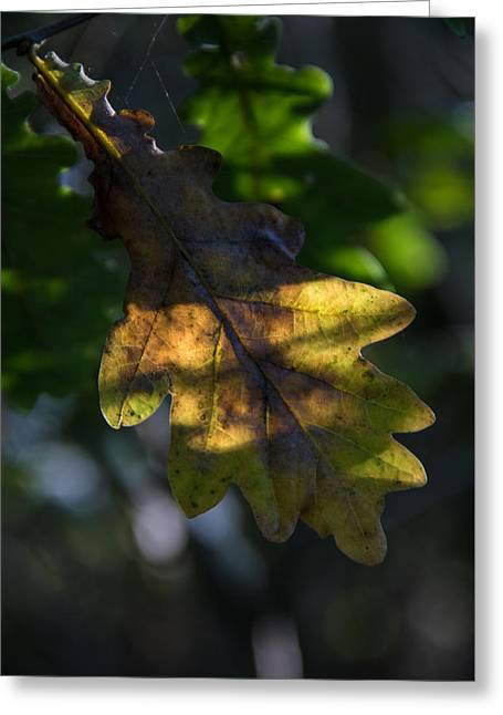 Greeting Card featuring the photograph The Light Fell Softly by Odd Jeppesen