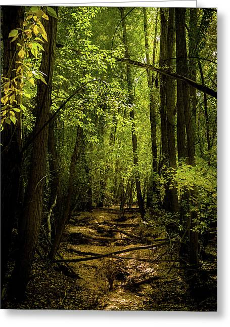 The Light In The Forest Greeting Card by TL Mair