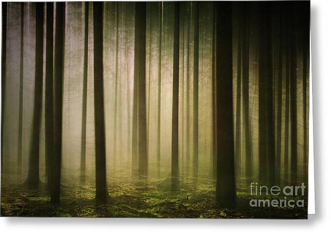 The Light In The Woods Greeting Card