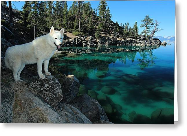 The Light Of Lake Tahoe Greeting Card