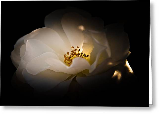 The Light Of Life Greeting Card by Loriental Photography