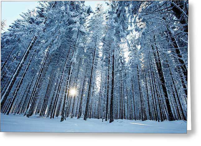 the Light - Snow Forest Greeting Card by Roeselien Raimond