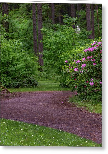 The Lighted Path Greeting Card by Michele James