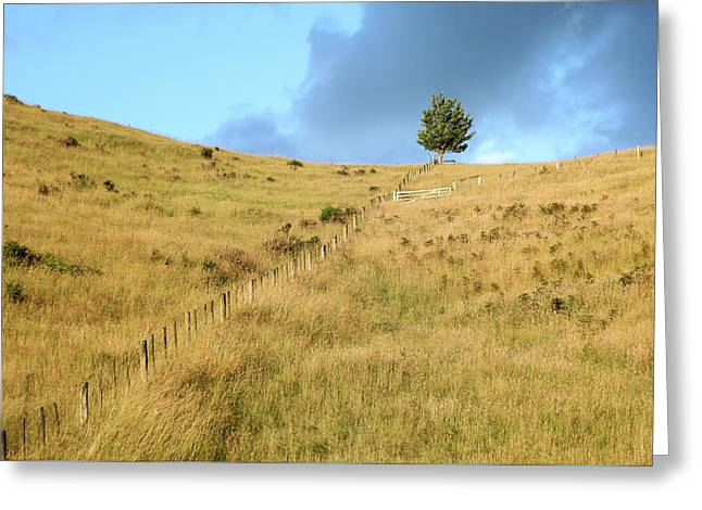 Greeting Card featuring the photograph The Lines The Tree And The Hill by Yoel Koskas