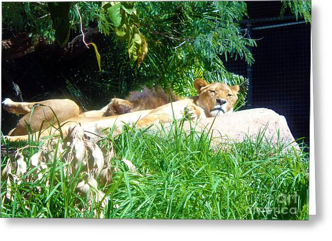 The Lion Awakes Greeting Card