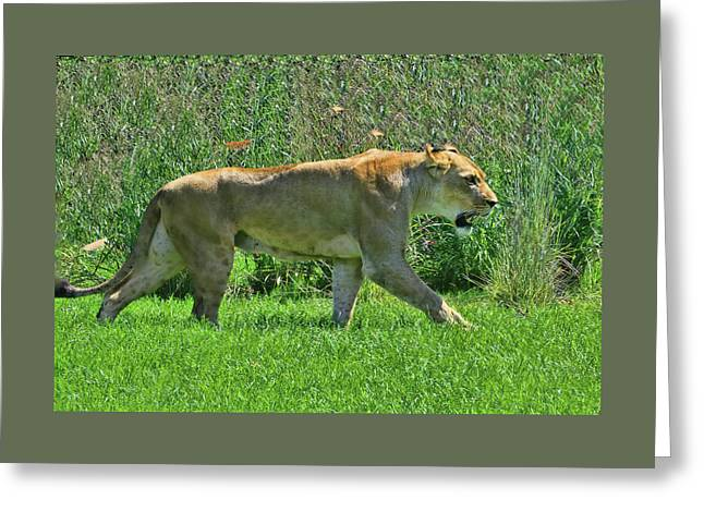 The Lion Queen # 2 Greeting Card