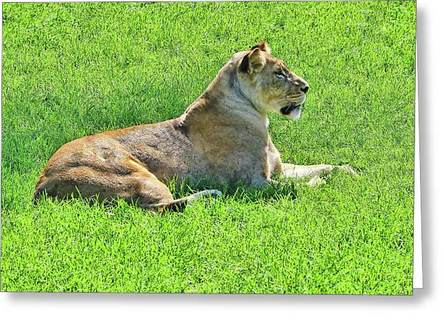 The Lion Queen Greeting Card