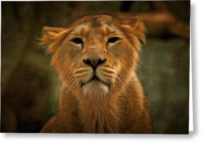 The Lioness Greeting Card by Scott Carruthers