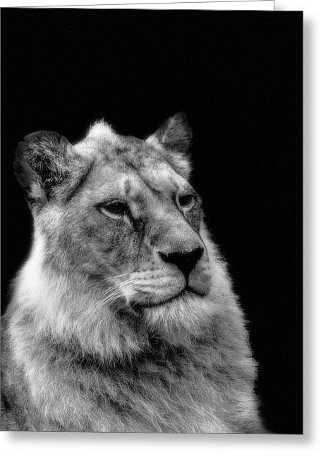 The Lioness Sitting Proud Greeting Card