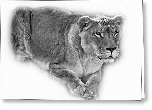 The Lioness - Vignette Bw Greeting Card by Steve Harrington