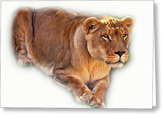 The Lioness - Vignette Greeting Card