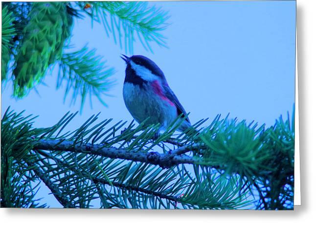 The Little Bird Sings Greeting Card by Jeff Swan