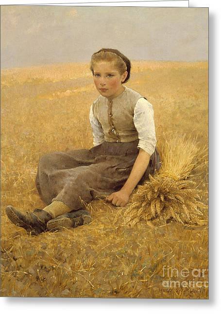 The Little Gleaner, 1884 Greeting Card by Hugo Salmson
