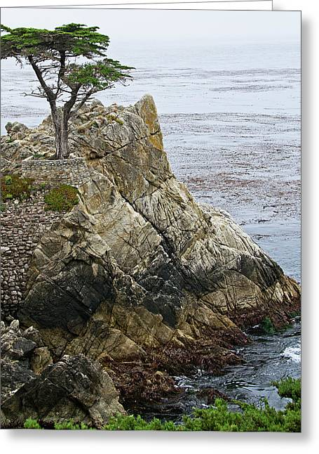 Cypress Trees Greeting Cards - The Lone Cypress - California Greeting Card by Brendan Reals