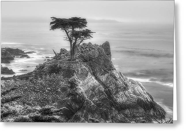The Lone Cypress 1 Greeting Card
