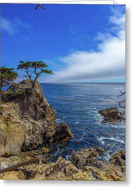The Lone Cypress 17 Mile Drive Greeting Card