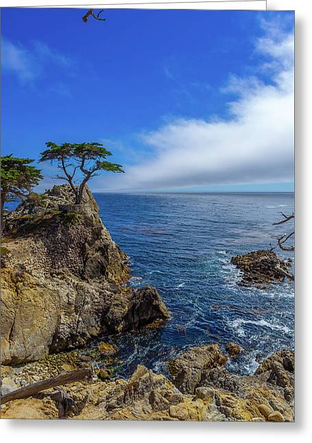 The Lone Cypress 17 Mile Drive Greeting Card by Scott McGuire