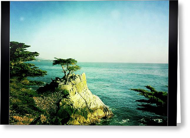 The Lone Cypress Greeting Card by Nina Prommer