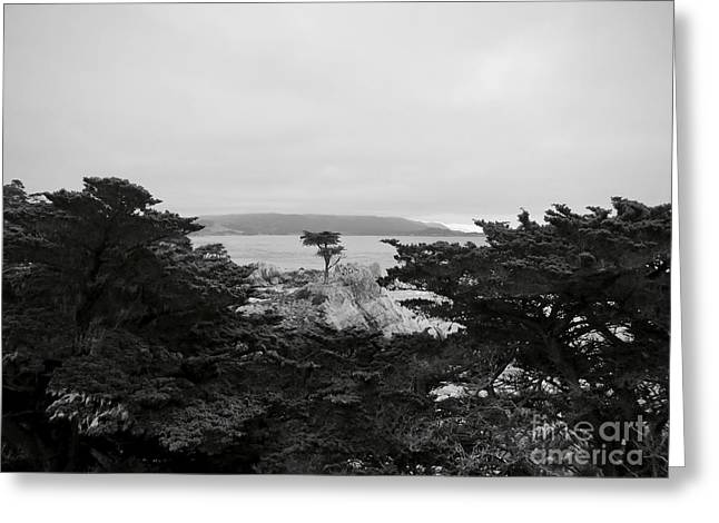 The Lone Cypress Of Monterey Greeting Card