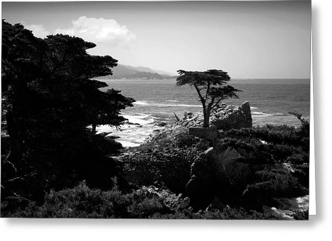 The Lone Cypress Tree B And W Greeting Card by Joyce Dickens