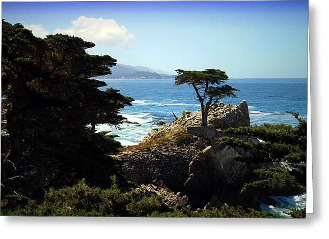 The Lone Cypress Tree Greeting Card by Joyce Dickens