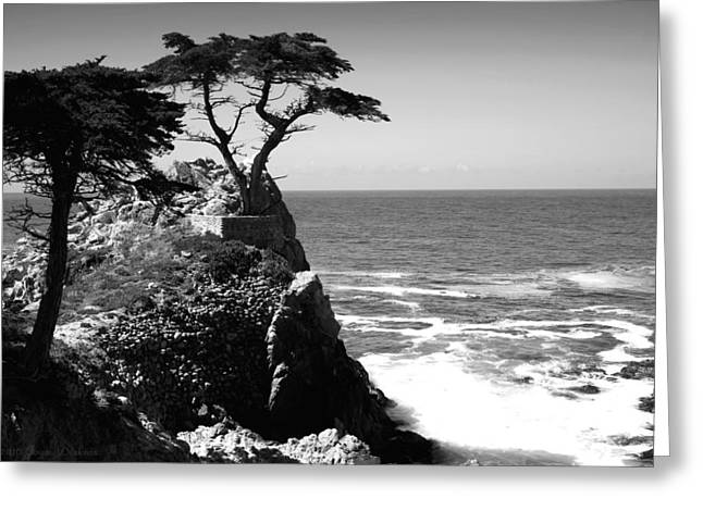 The Lone Cypress Tree Two B And W Greeting Card by Joyce Dickens