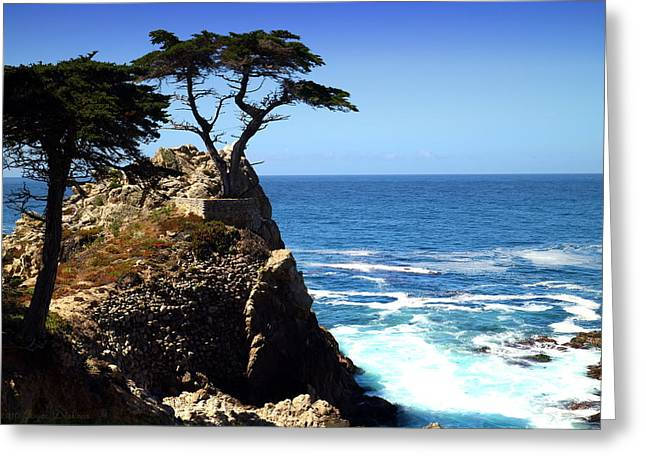 The Lone Cypress Tree Two Greeting Card by Joyce Dickens