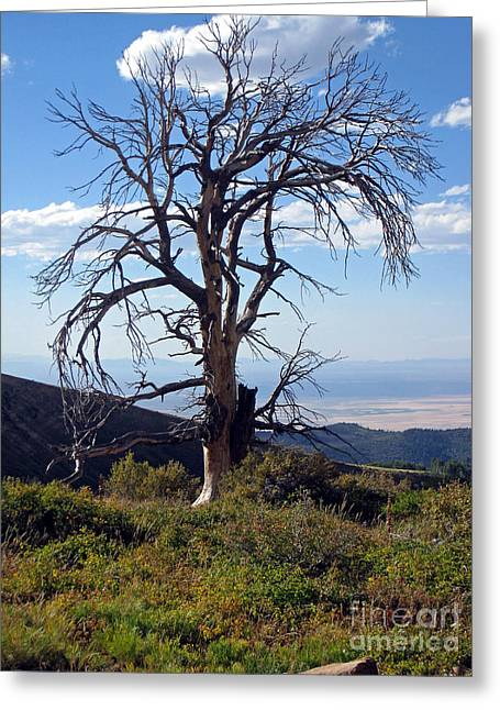 Greeting Card featuring the photograph The Lone Tree by Juls Adams