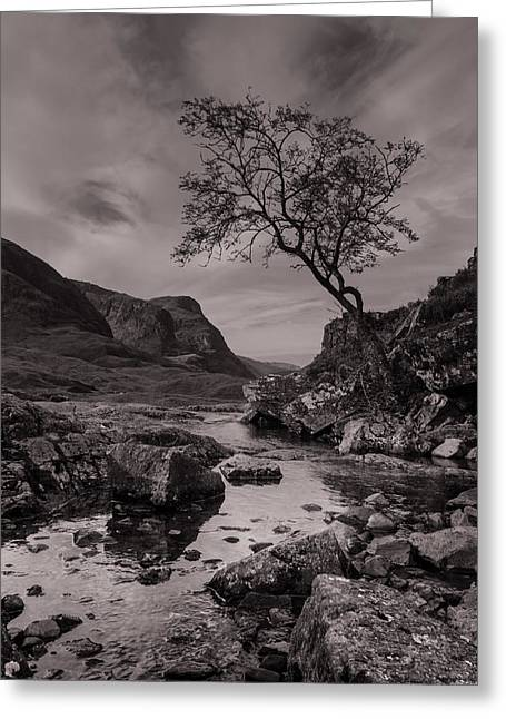 The Lone Tree Of Glencoe Greeting Card by Ben Spencer