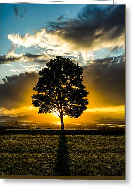 The Lone Tree Greeting Card by Peter Irwindale