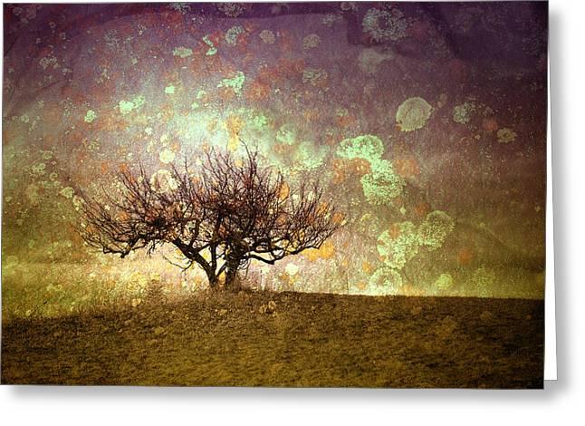 The Lone Tree Greeting Card by Tara Turner