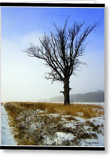 The Lone Tree Greeting Card by Trina Prenzi
