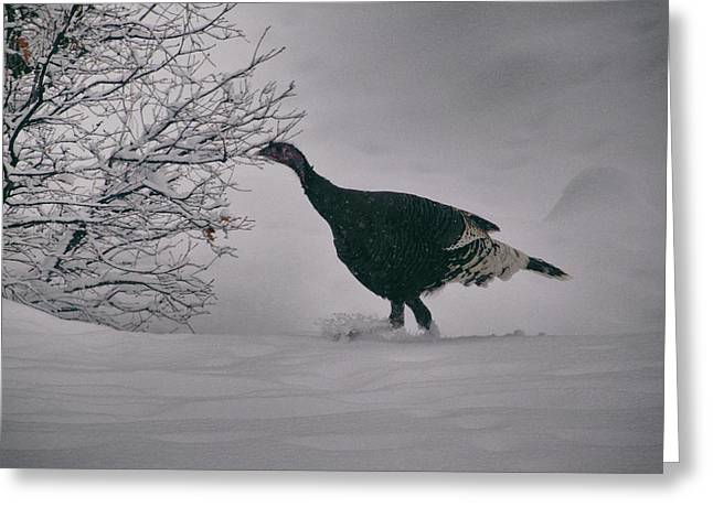 Greeting Card featuring the photograph The Lone Turkey by Jason Coward