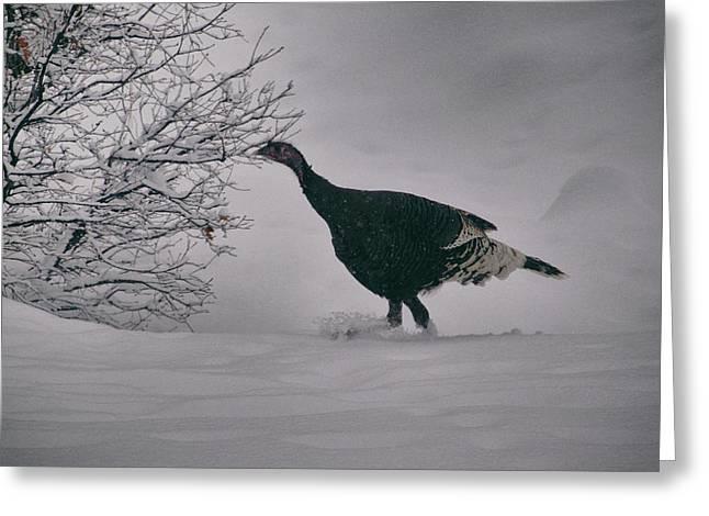 The Lone Turkey Greeting Card