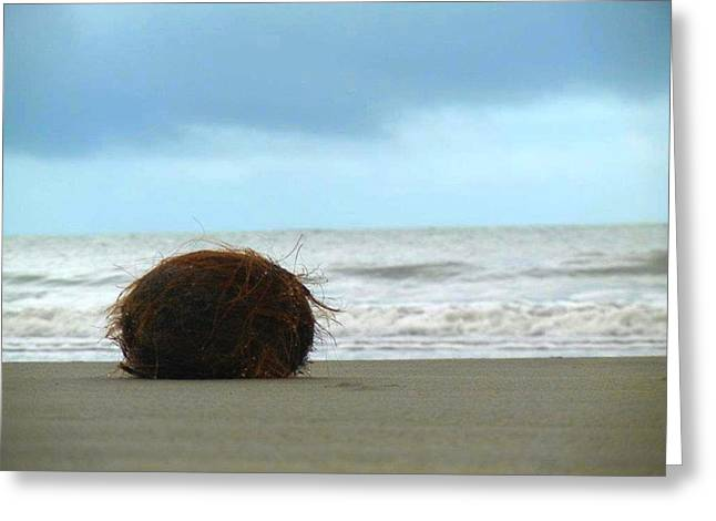 The Lonely Coconut Greeting Card