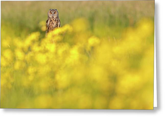The Long Eared Owl In The Flower Bed Greeting Card