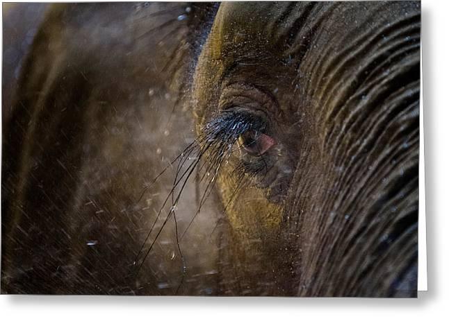 The Longest Eyelashes Greeting Card by Emmanuel Panagiotakis