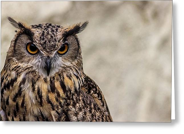 The Look Of An Owl Greeting Card by Martin Newman