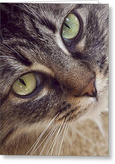 The Look Of Love Greeting Card by Lynn Andrews