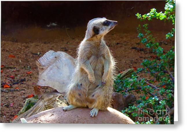 The Lookout - Meerkat Greeting Card