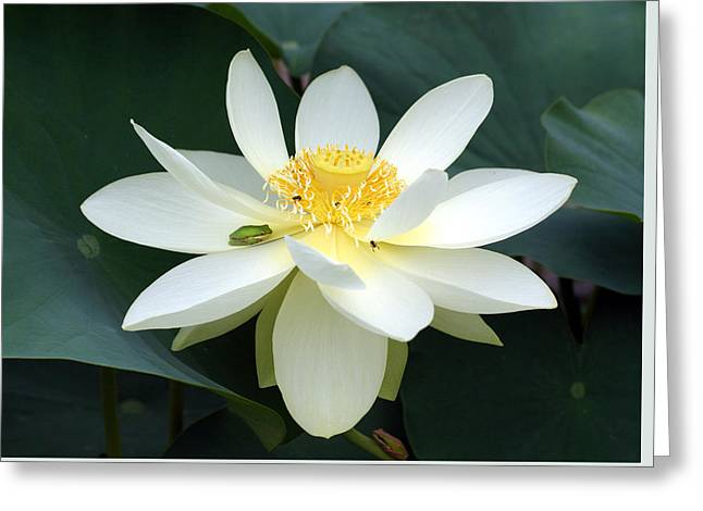 Greeting Card featuring the photograph The Lotus Flower The Frog And The Bee by Gary Crockett