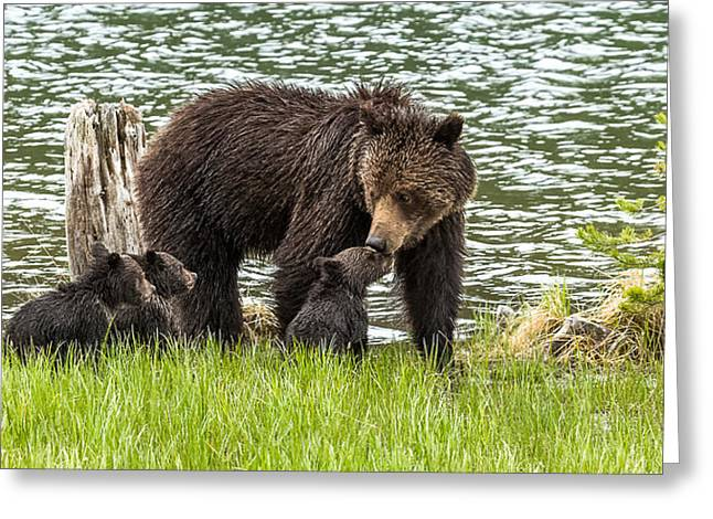 The Love Of Mama Bear Greeting Card by Yeates Photography