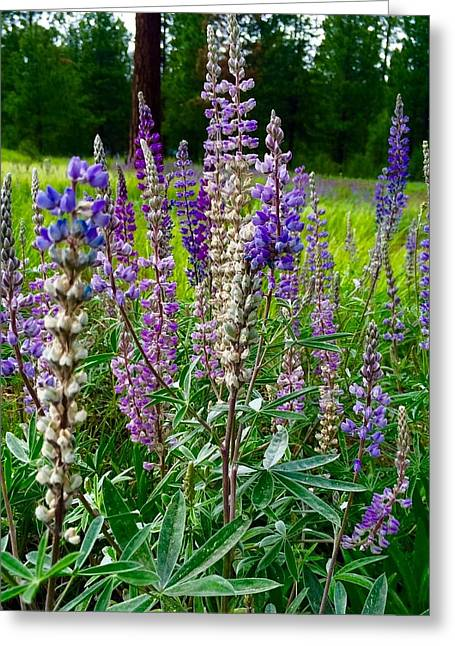 The Lupine Crowd Greeting Card