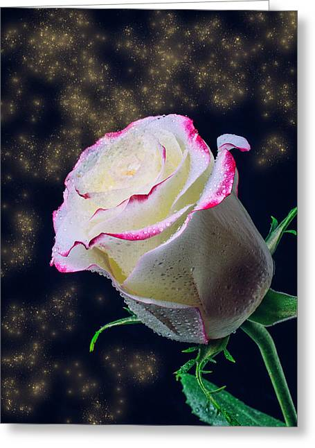 The Magic Of Roses Greeting Card