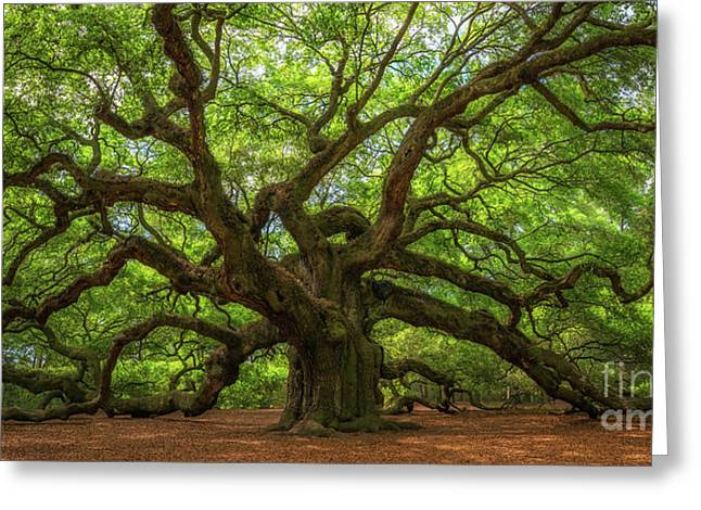 The Magical Angel Oak Tree Panorama  Greeting Card