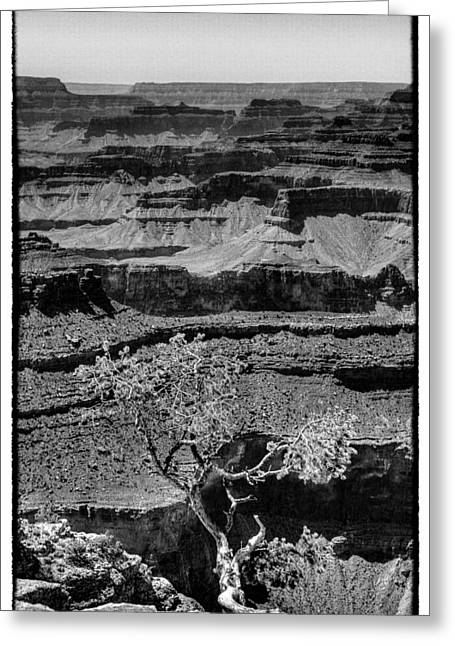 The Magnificent Grand Canyon Greeting Card by David Patterson