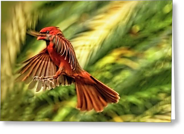 The Male Cardinal Approaches Greeting Card